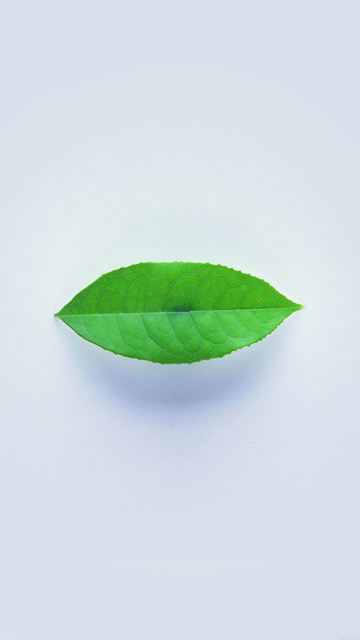 Simple Green Leaf Minimal.jpg