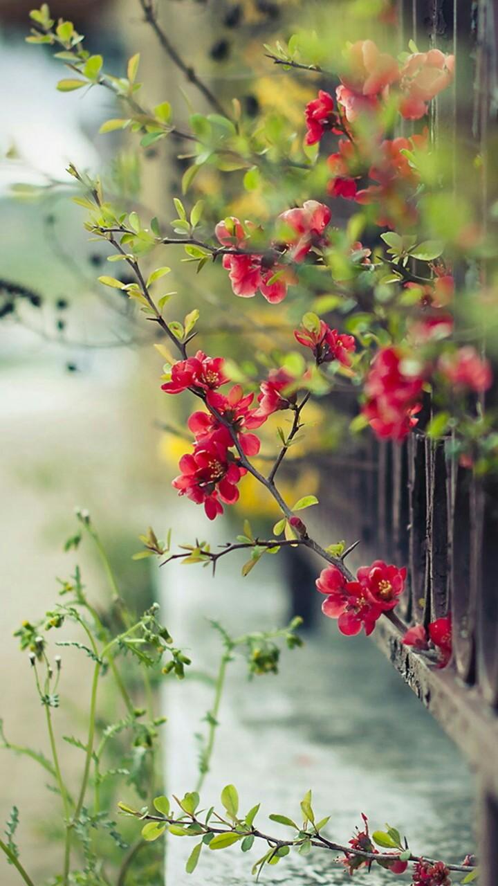 red_flowers.jpg